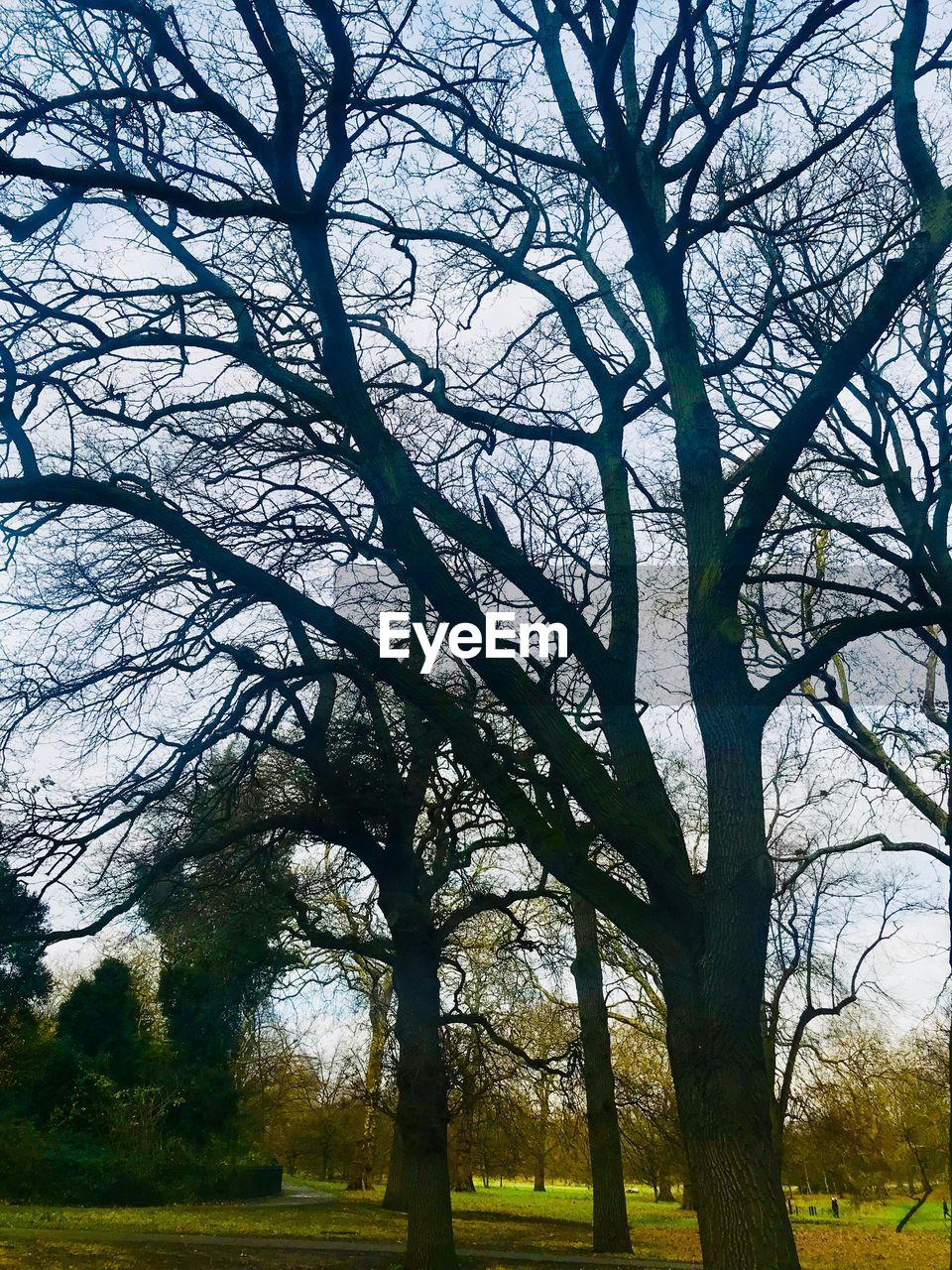 tree, bare tree, branch, nature, tree trunk, tranquility, beauty in nature, day, no people, outdoors, tranquil scene, scenics, growth, forest, landscape, grass, sky