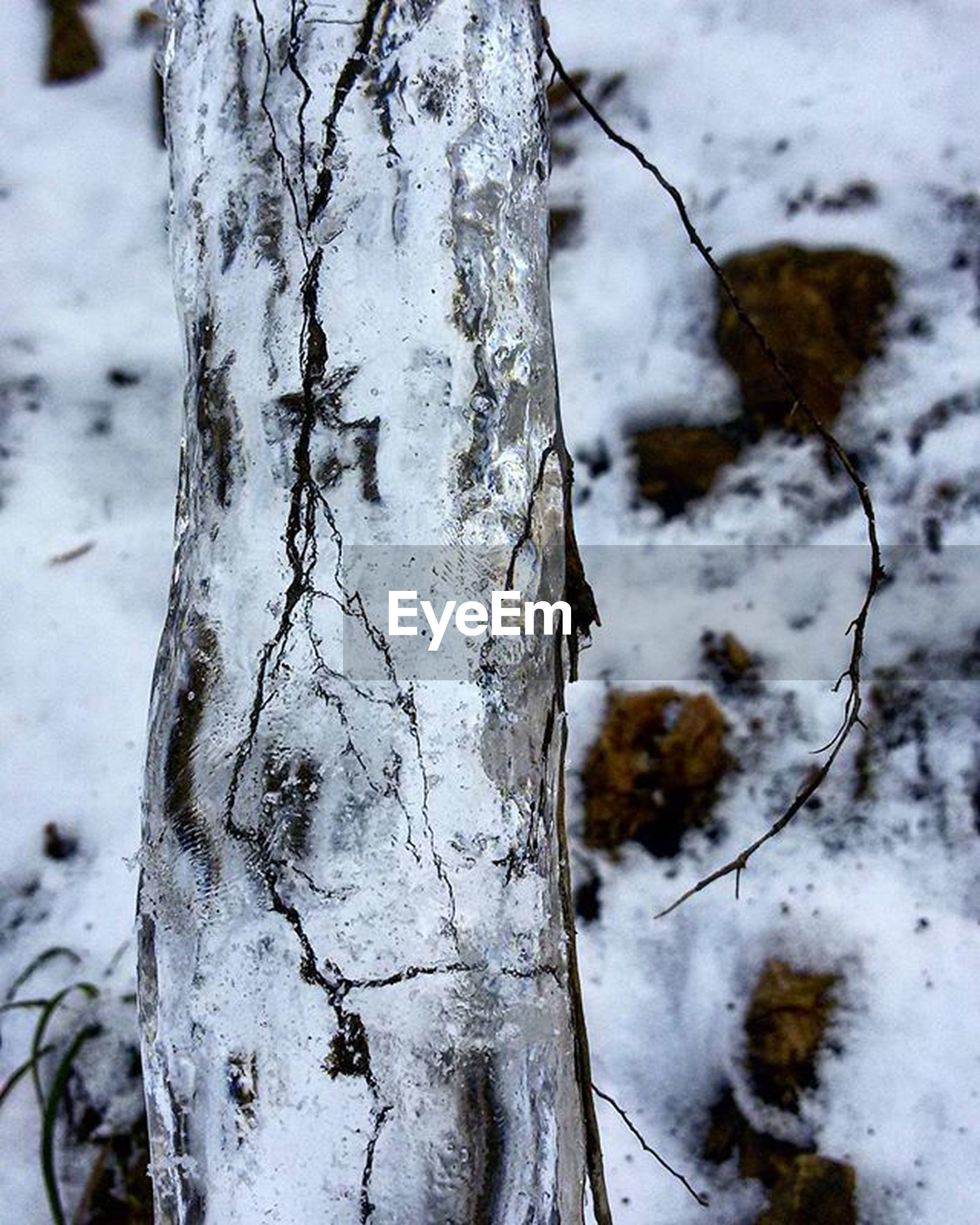 tree trunk, close-up, textured, tree, wood - material, nature, focus on foreground, water, rough, weathered, day, outdoors, winter, cold temperature, tranquility, bark, no people, branch, ice, season