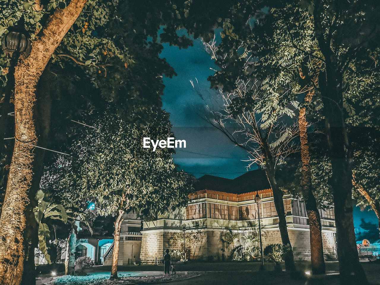 tree, architecture, built structure, building exterior, plant, nature, building, no people, tree trunk, trunk, sky, city, night, outdoors, branch, growth, residential district, street, house, place
