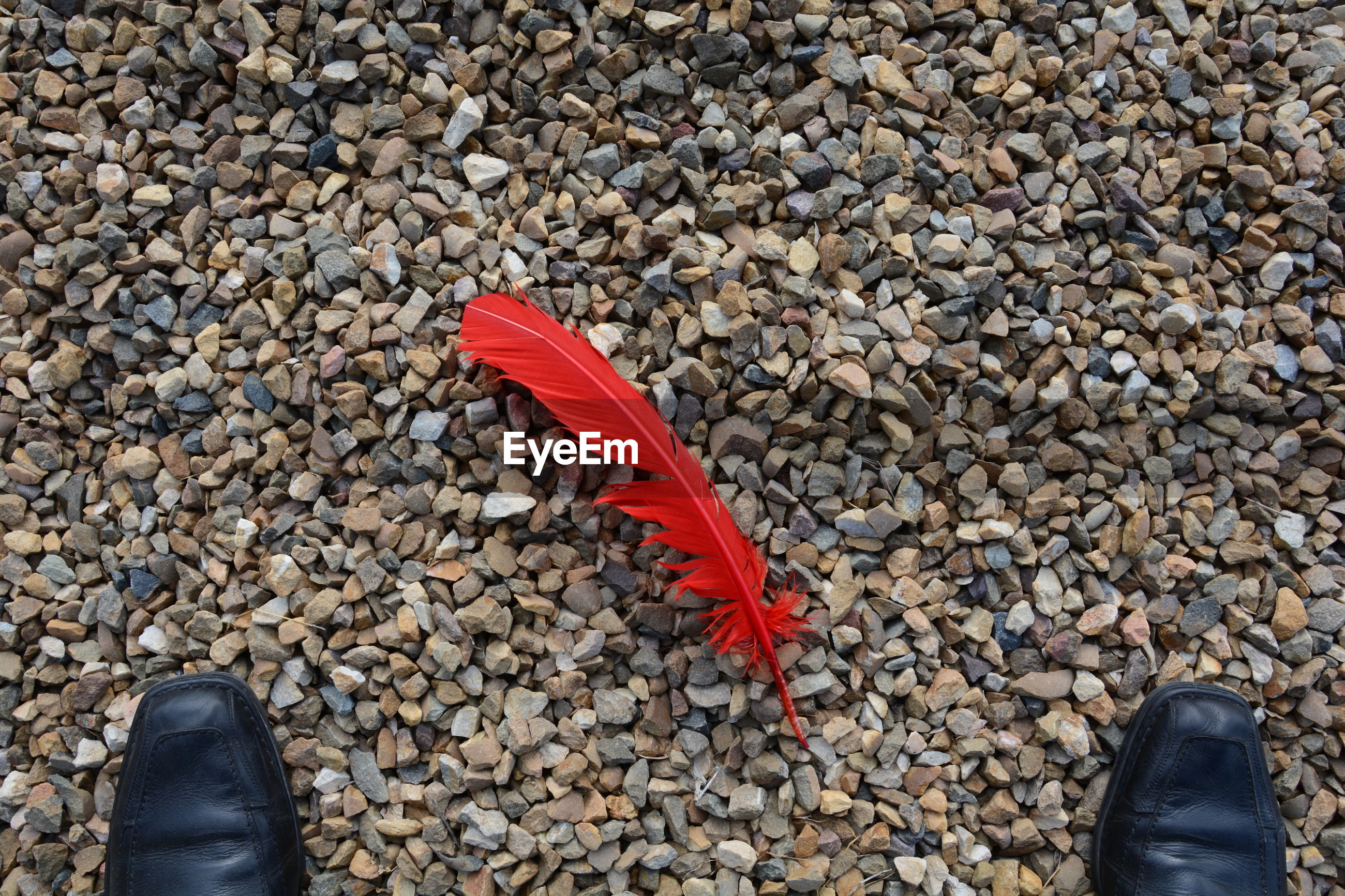 Red feather on ground