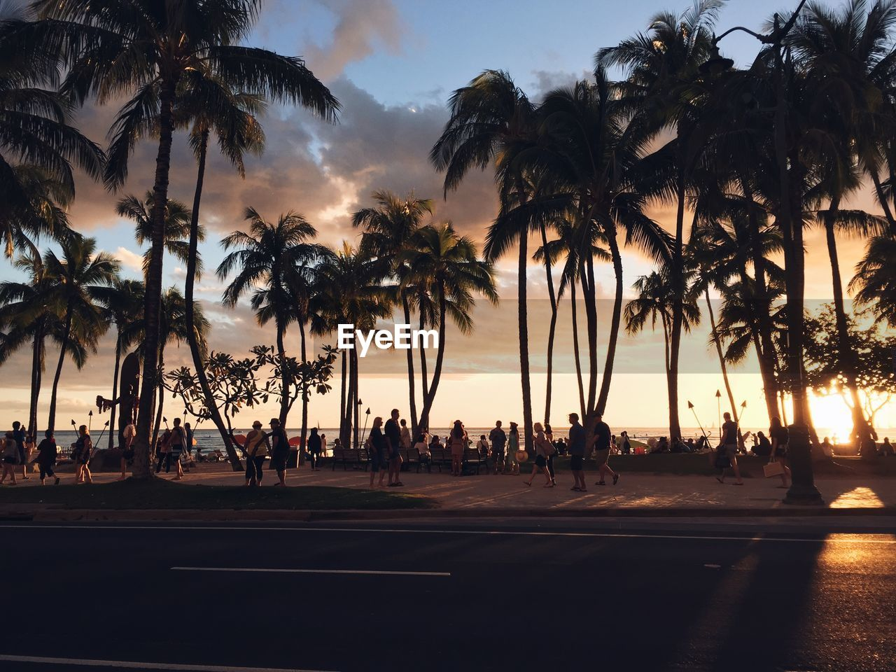 palm tree, tree, tropical climate, group of people, sky, plant, silhouette, nature, real people, sunset, large group of people, crowd, outdoors, lifestyles, men, beach, leisure activity, land, road, coconut palm tree