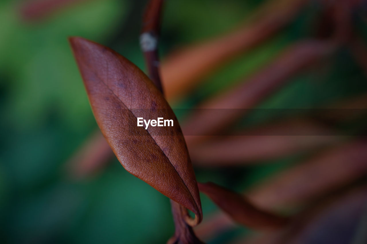 close-up, plant, plant part, growth, leaf, focus on foreground, beauty in nature, no people, nature, fragility, day, vulnerability, freshness, selective focus, outdoors, flower, green color, brown, flowering plant, petal, flower head, leaves