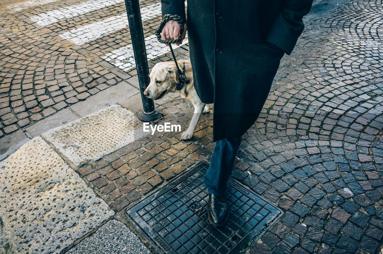 Low Section Of Man With Dog Walking On Street