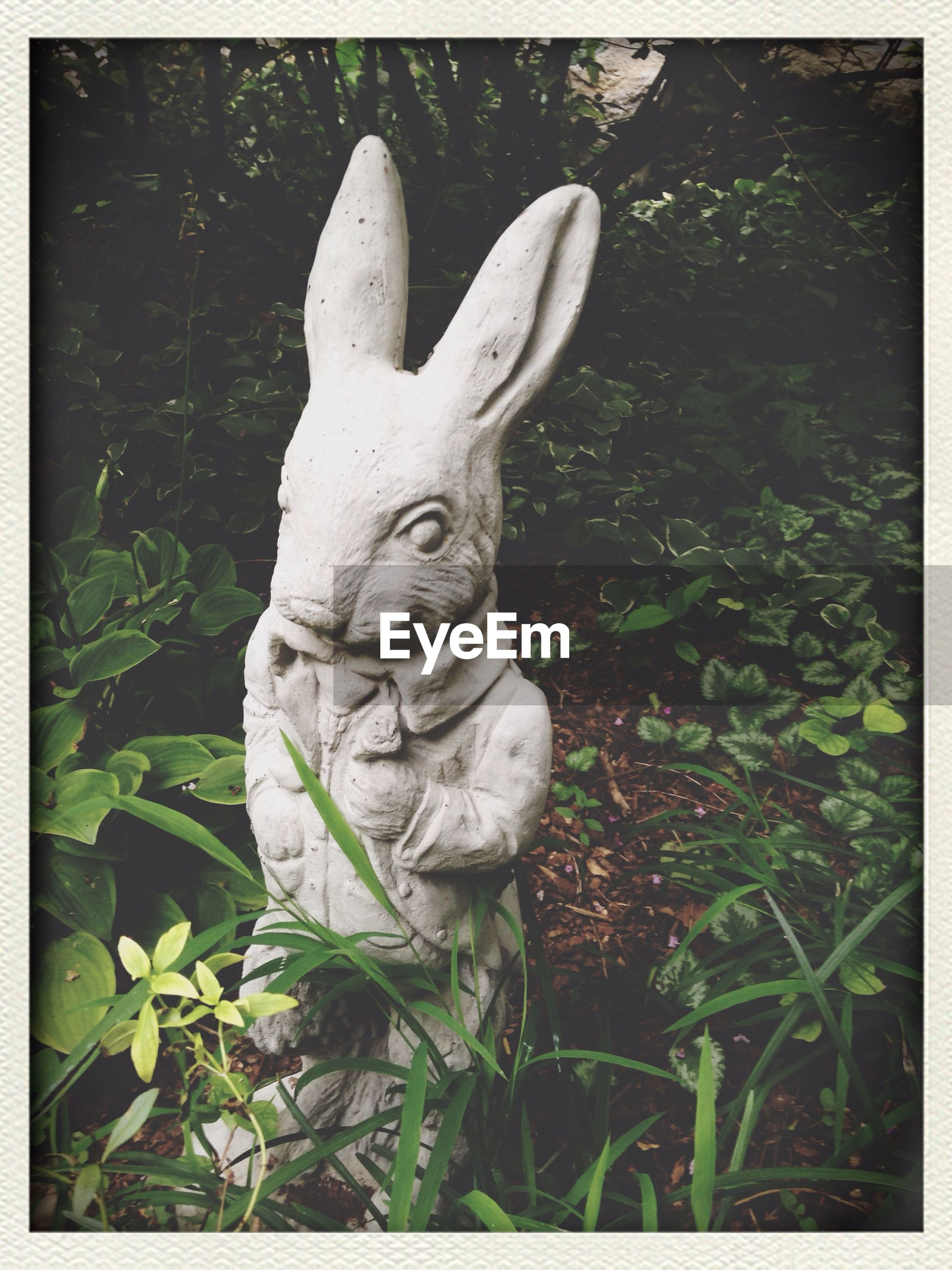 I'm late! Alice In Wonderland Rabbit Bunny Fantasy - EyeEm - 웹