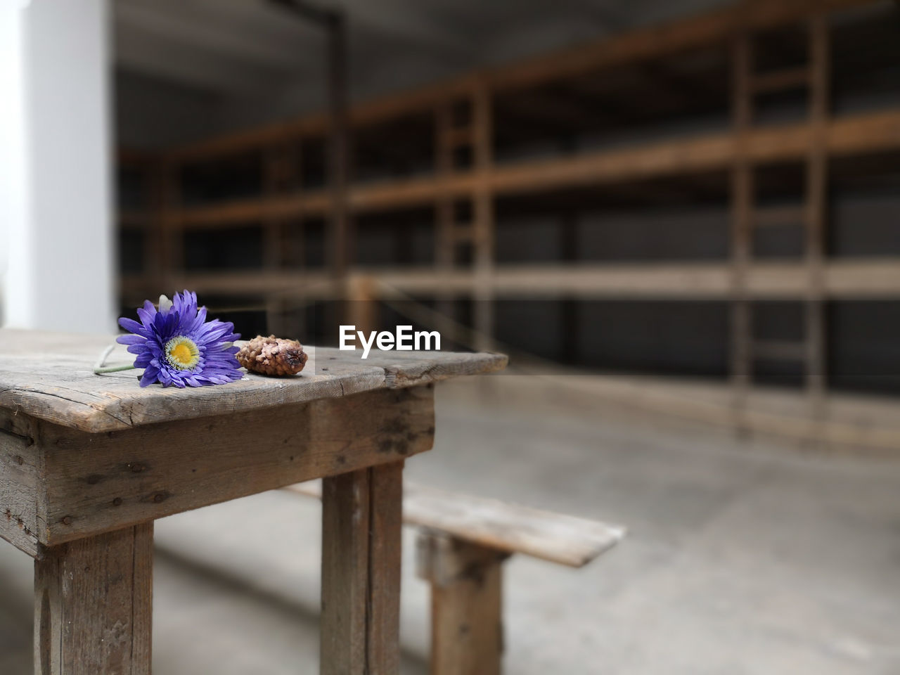 flower, flowering plant, plant, wood - material, freshness, fragility, vulnerability, nature, no people, focus on foreground, day, close-up, beauty in nature, outdoors, petal, built structure, architecture, flower head, table, selective focus