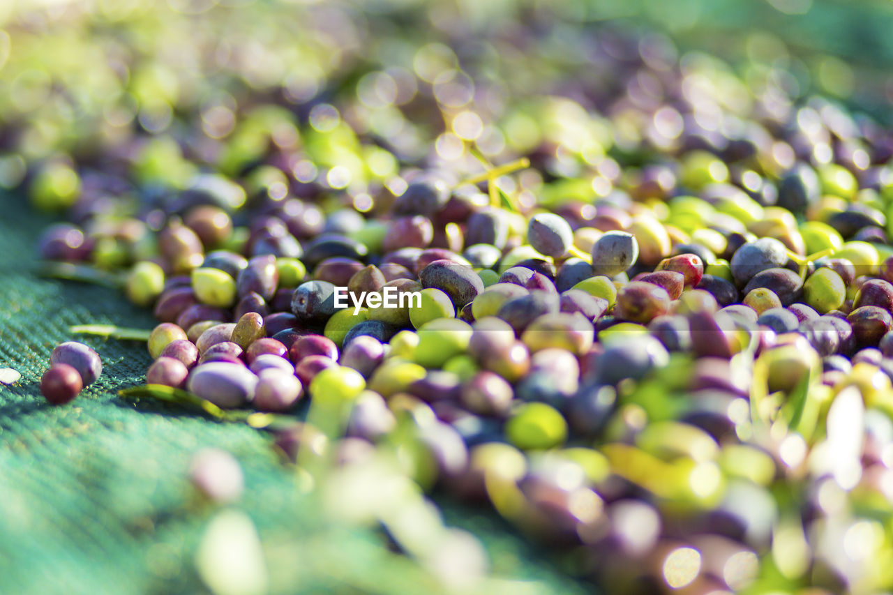 selective focus, food and drink, food, freshness, close-up, green color, healthy eating, wellbeing, no people, fruit, large group of objects, day, abundance, still life, olive, growth, berry fruit, nature, grape, full frame, purple