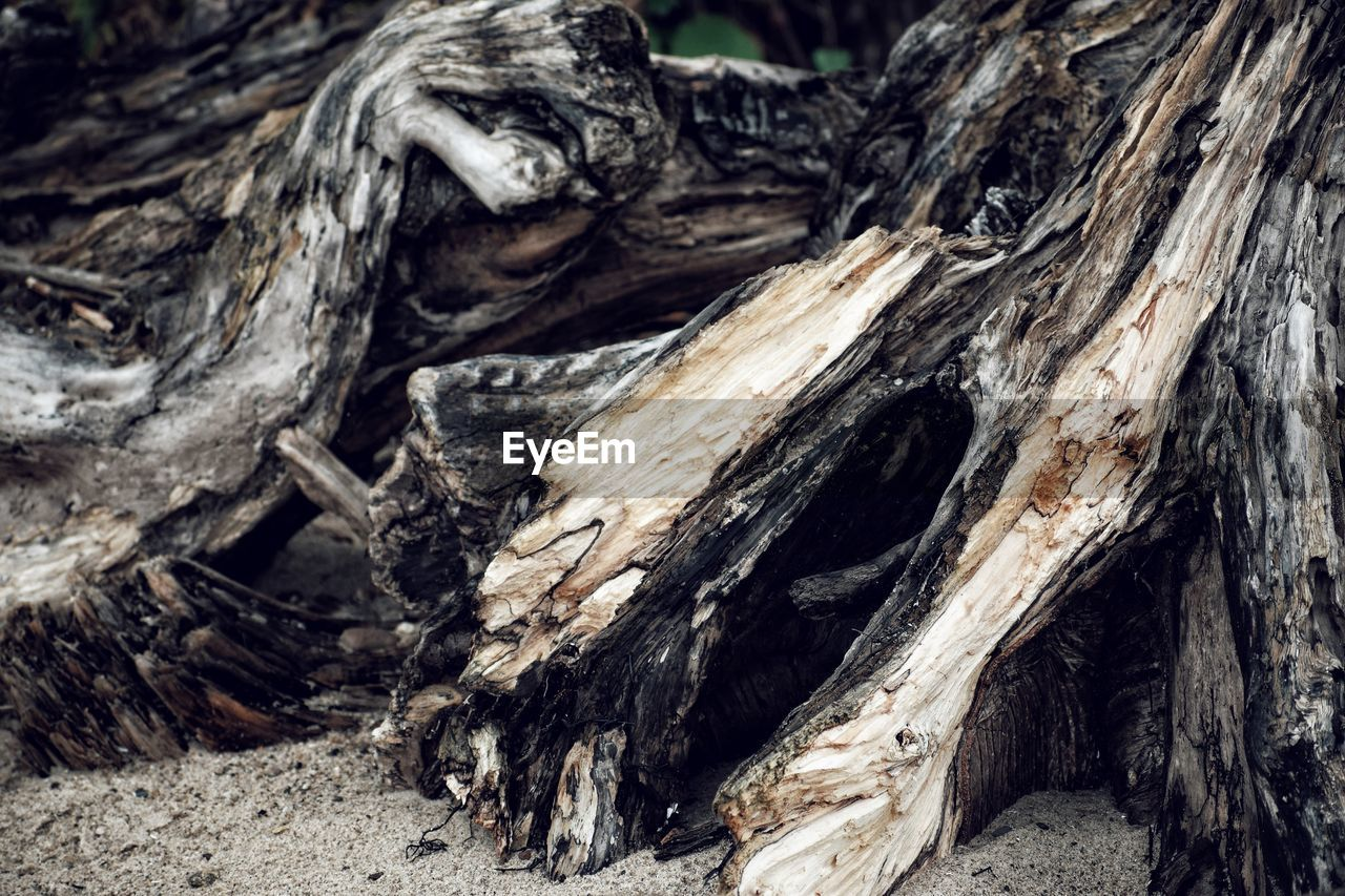 tree, wood - material, textured, tree trunk, log, trunk, no people, nature, close-up, plant, forest, wood, deforestation, timber, land, day, bark, rough, plant bark, pattern, outdoors, woodland, dead plant, driftwood