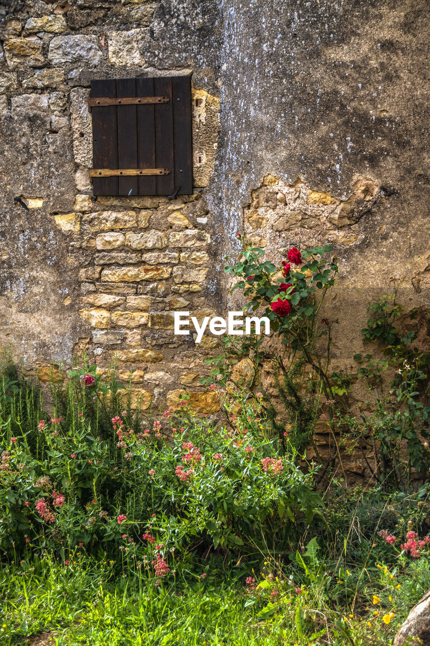 flower, window, architecture, plant, built structure, growth, building exterior, day, house, no people, outdoors, nature, blooming, fragility, window box, flower head, freshness
