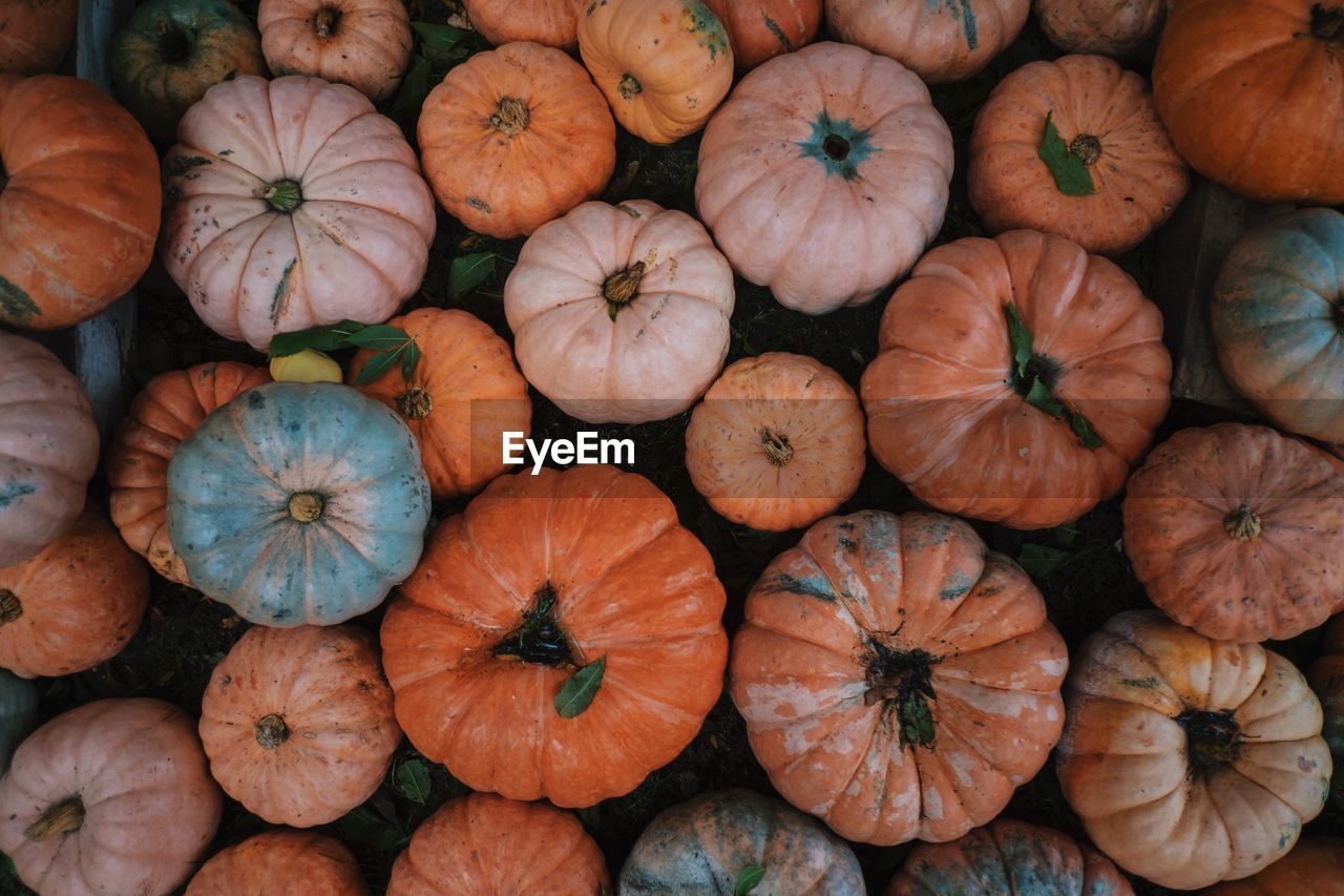 Directly Above Of Pumpkins Arranged On Field During Autumn