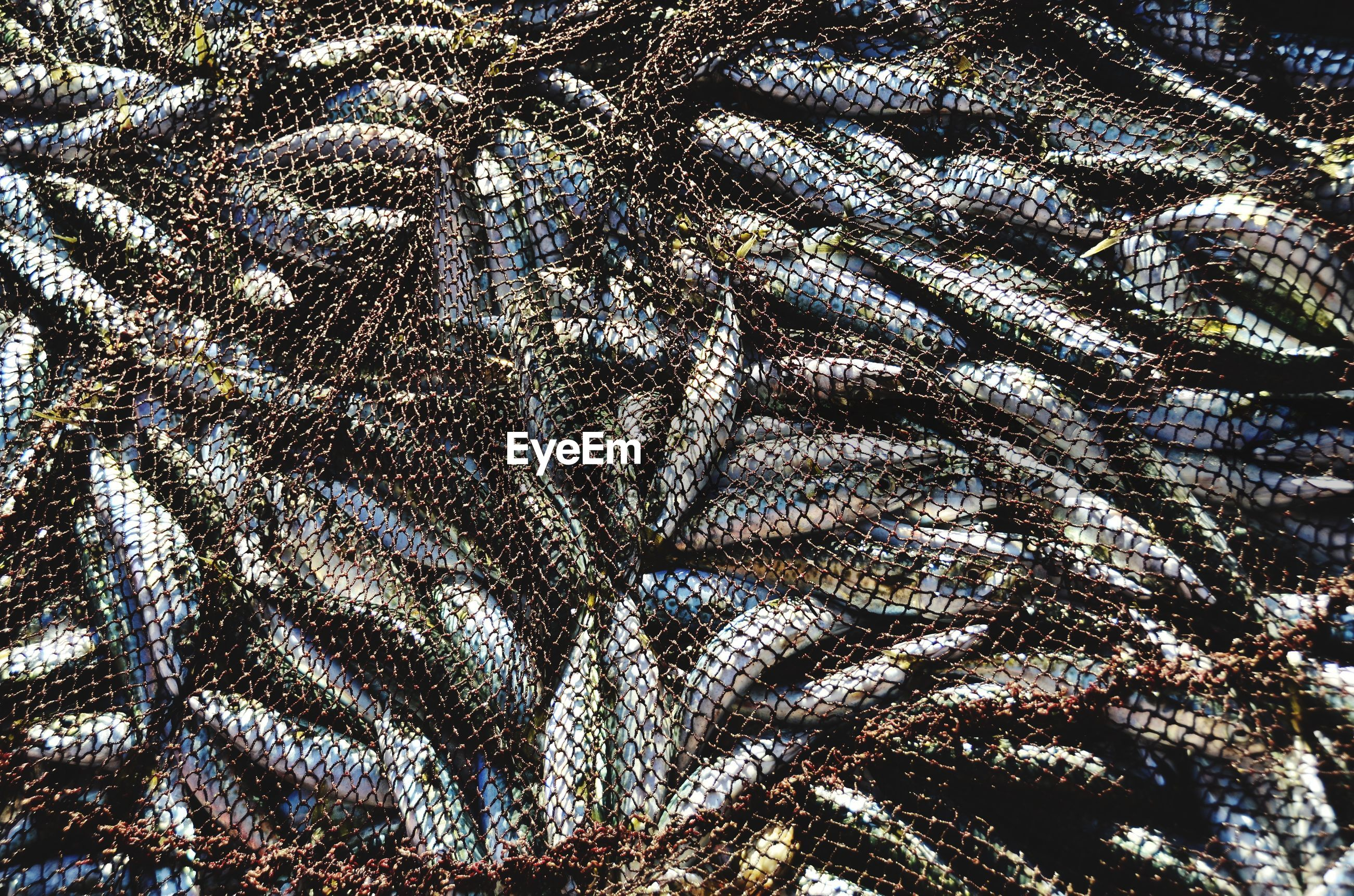 Full frame shot of fishing net with fish
