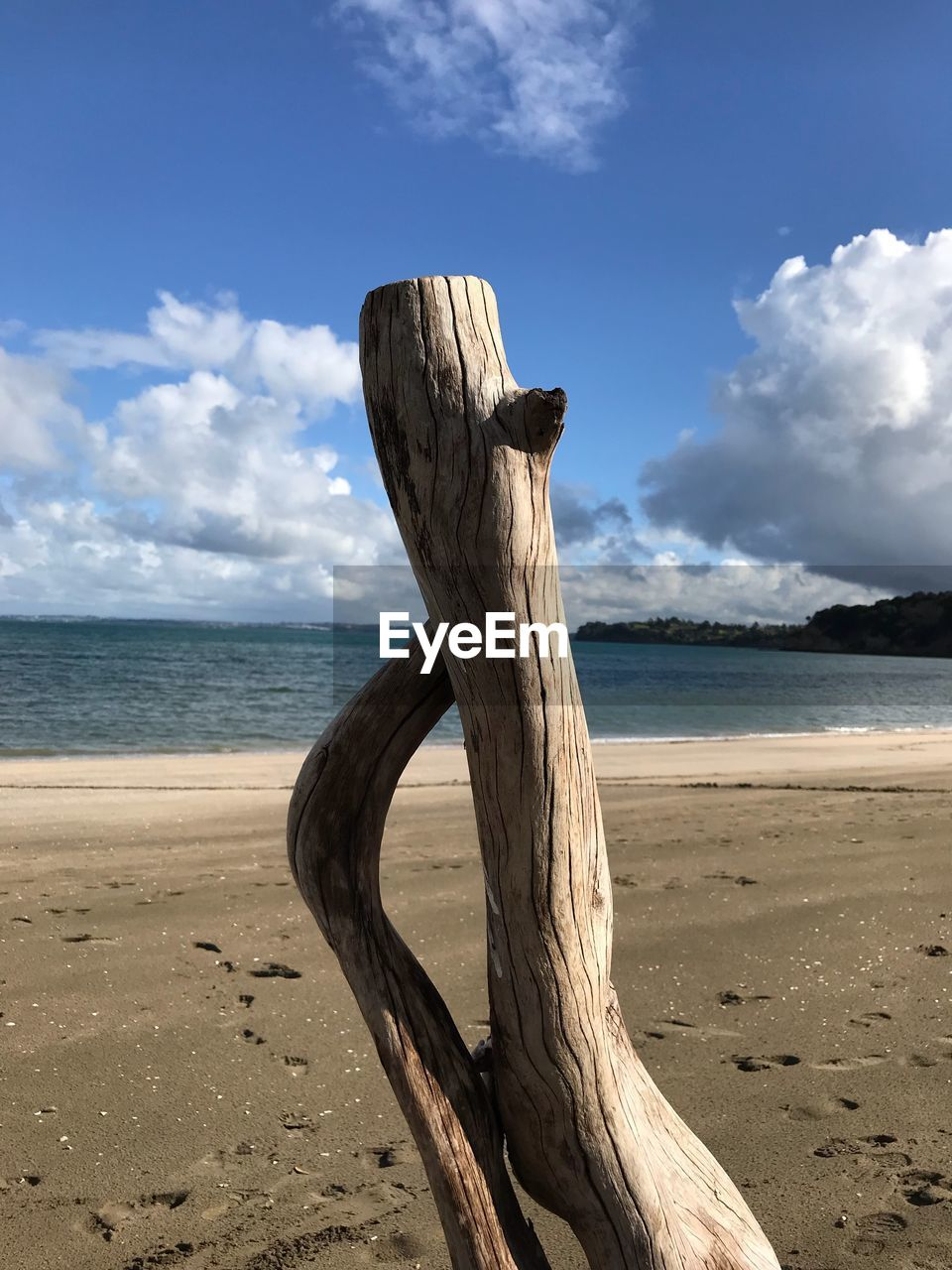 DRIFTWOOD ON WOODEN POSTS ON BEACH