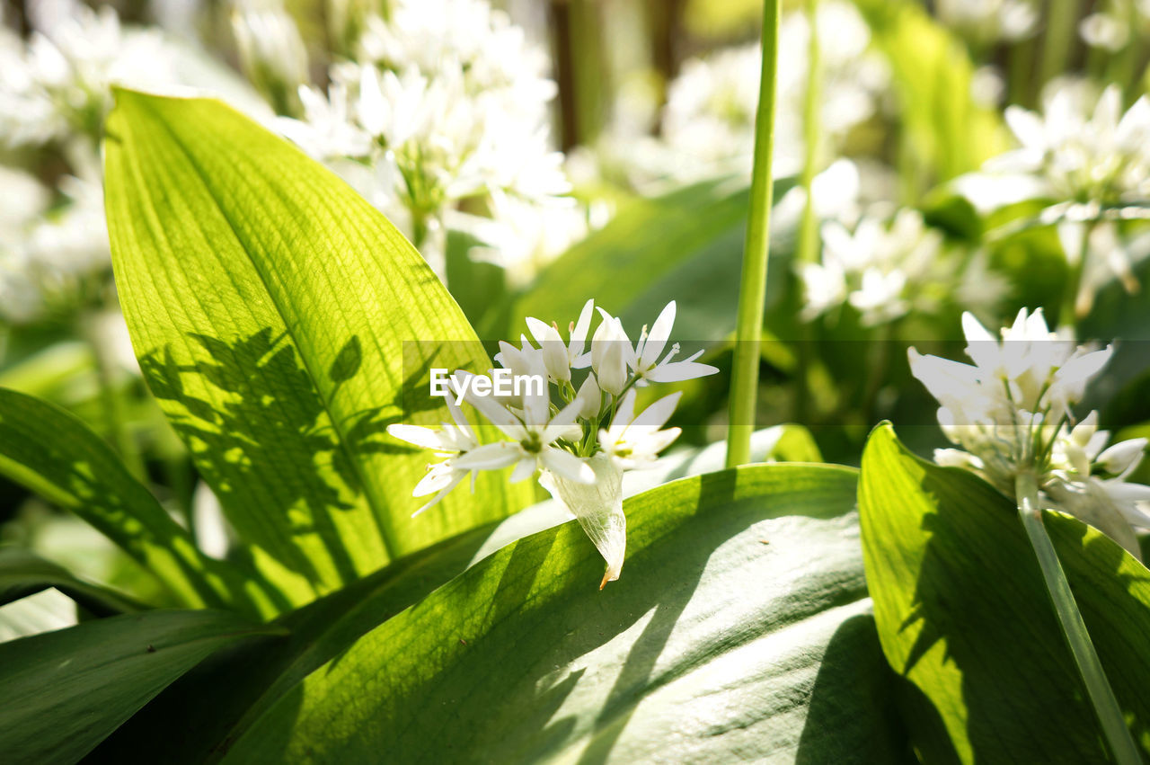 leaf, green color, nature, growth, plant, flower, day, beauty in nature, sunlight, freshness, outdoors, no people, fragility, close-up, grass, flower head