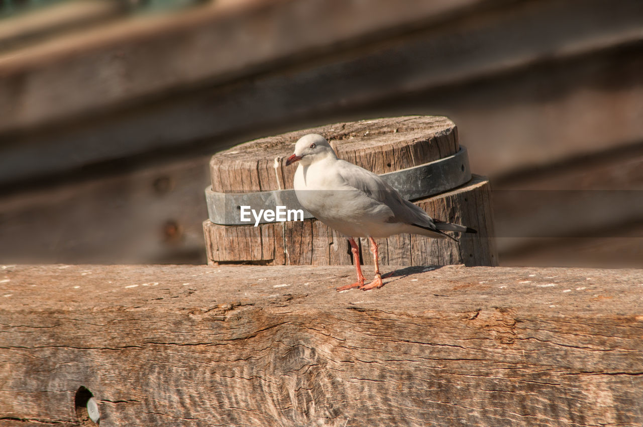 animal wildlife, animal, animal themes, vertebrate, bird, animals in the wild, wood - material, one animal, day, no people, nature, perching, focus on foreground, outdoors, sunlight, tree, selective focus, wood, built structure, low angle view