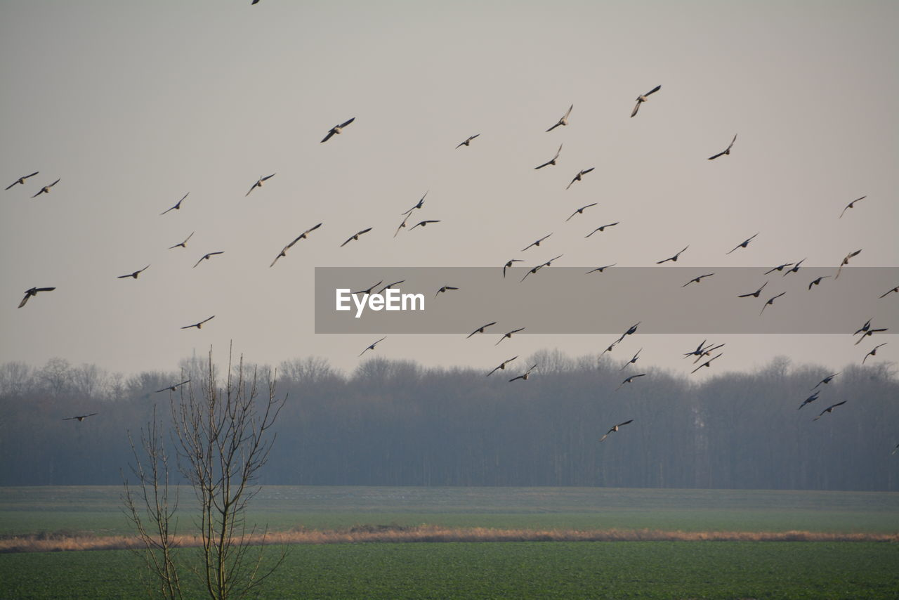 animal themes, large group of animals, animal, bird, flying, animal wildlife, animals in the wild, group of animals, vertebrate, sky, beauty in nature, nature, flock of birds, plant, no people, fog, land, tranquility, day, scenics - nature