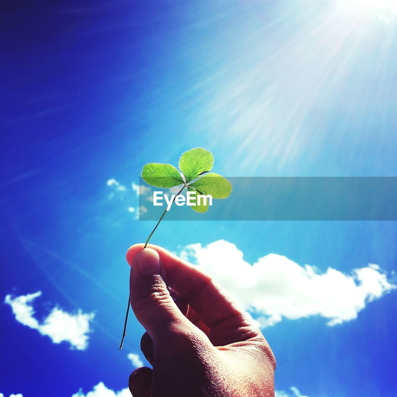 human hand, sky, hand, human body part, holding, one person, leaf, body part, unrecognizable person, real people, finger, nature, plant part, low angle view, sunlight, blue, human finger, day, cloud - sky, personal perspective, outdoors, lens flare, human limb, small, care