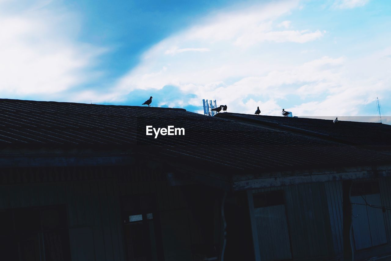 Birds Perching On Roof Of House Against Sky
