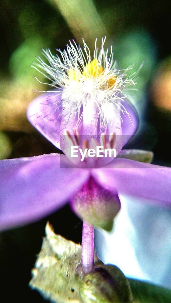flower, petal, fragility, beauty in nature, nature, flower head, freshness, close-up, growth, day, purple, plant, no people, outdoors, stamen, focus on foreground, blooming, passion flower