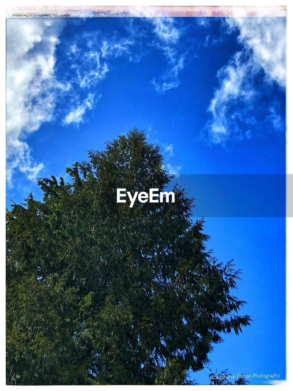 sky, tree, transfer print, blue, plant, nature, auto post production filter, beauty in nature, cloud - sky, no people, low angle view, day, tranquility, growth, outdoors, green, tranquil scene, scenics - nature, sunlight, positive emotion, coniferous tree, high