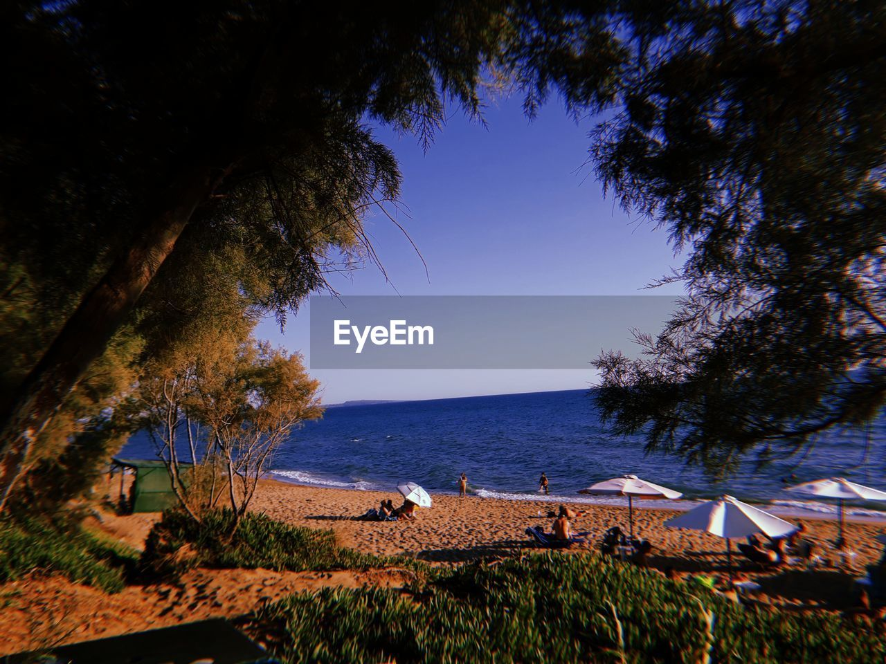 water, tree, plant, sky, sea, scenics - nature, beauty in nature, nature, tranquility, tranquil scene, land, horizon, horizon over water, beach, no people, clear sky, blue, growth, outdoors