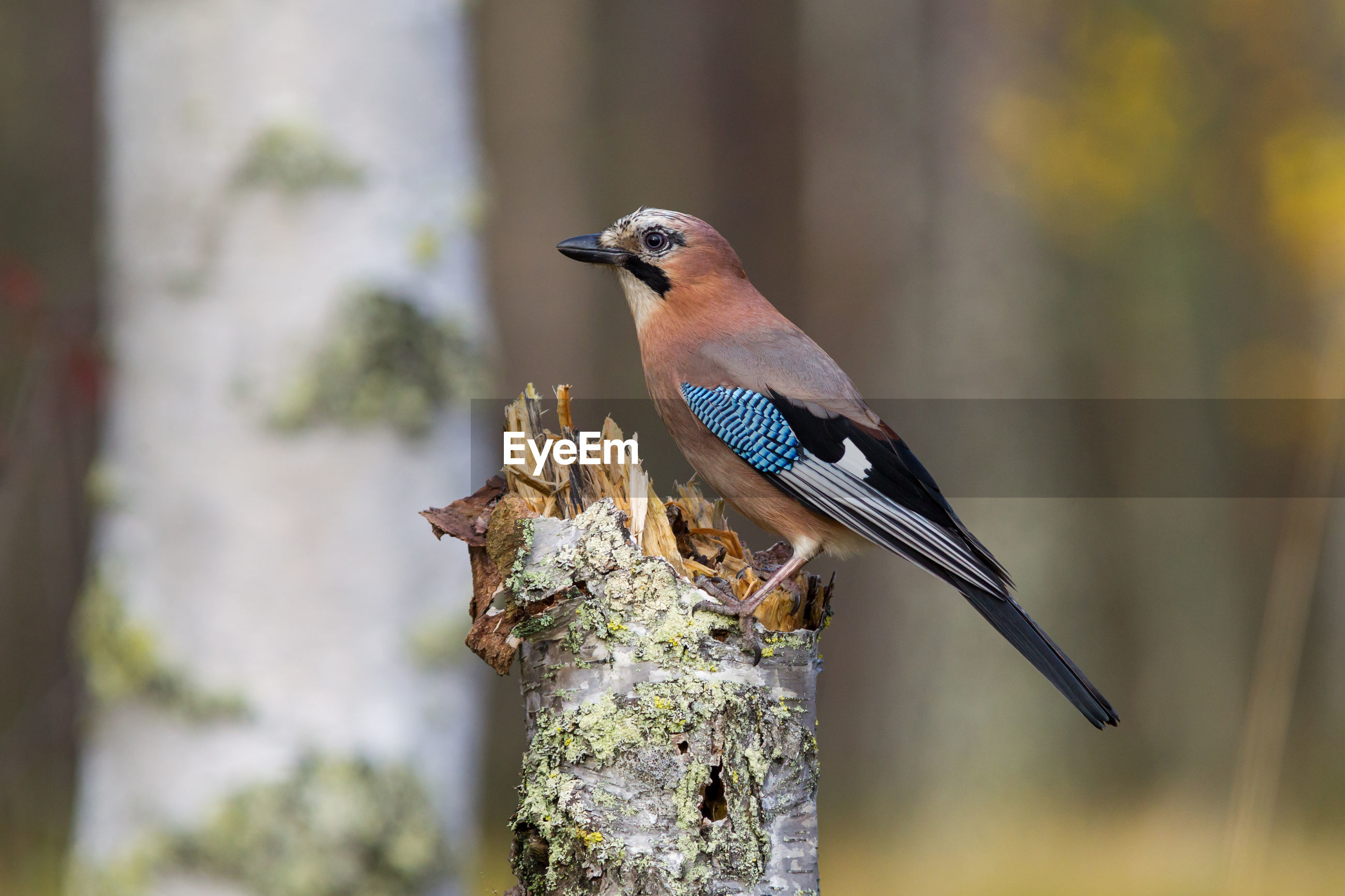 Side view of bird perching on tree trunk