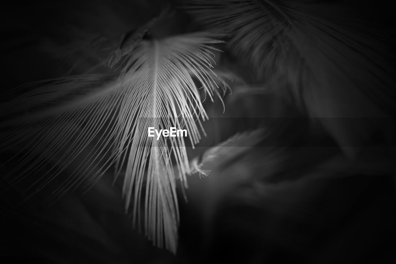 beauty in nature, plant, close-up, selective focus, no people, growth, leaf, nature, vulnerability, plant part, fragility, night, freshness, softness, outdoors, tranquility, flower, palm leaf, natural pattern, tree