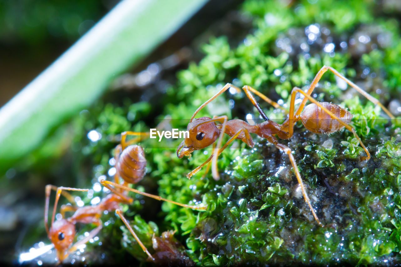animal, animal themes, animal wildlife, animals in the wild, close-up, invertebrate, one animal, insect, no people, plant, green color, focus on foreground, nature, day, animal antenna, selective focus, animal body part, outdoors, food, animal eye