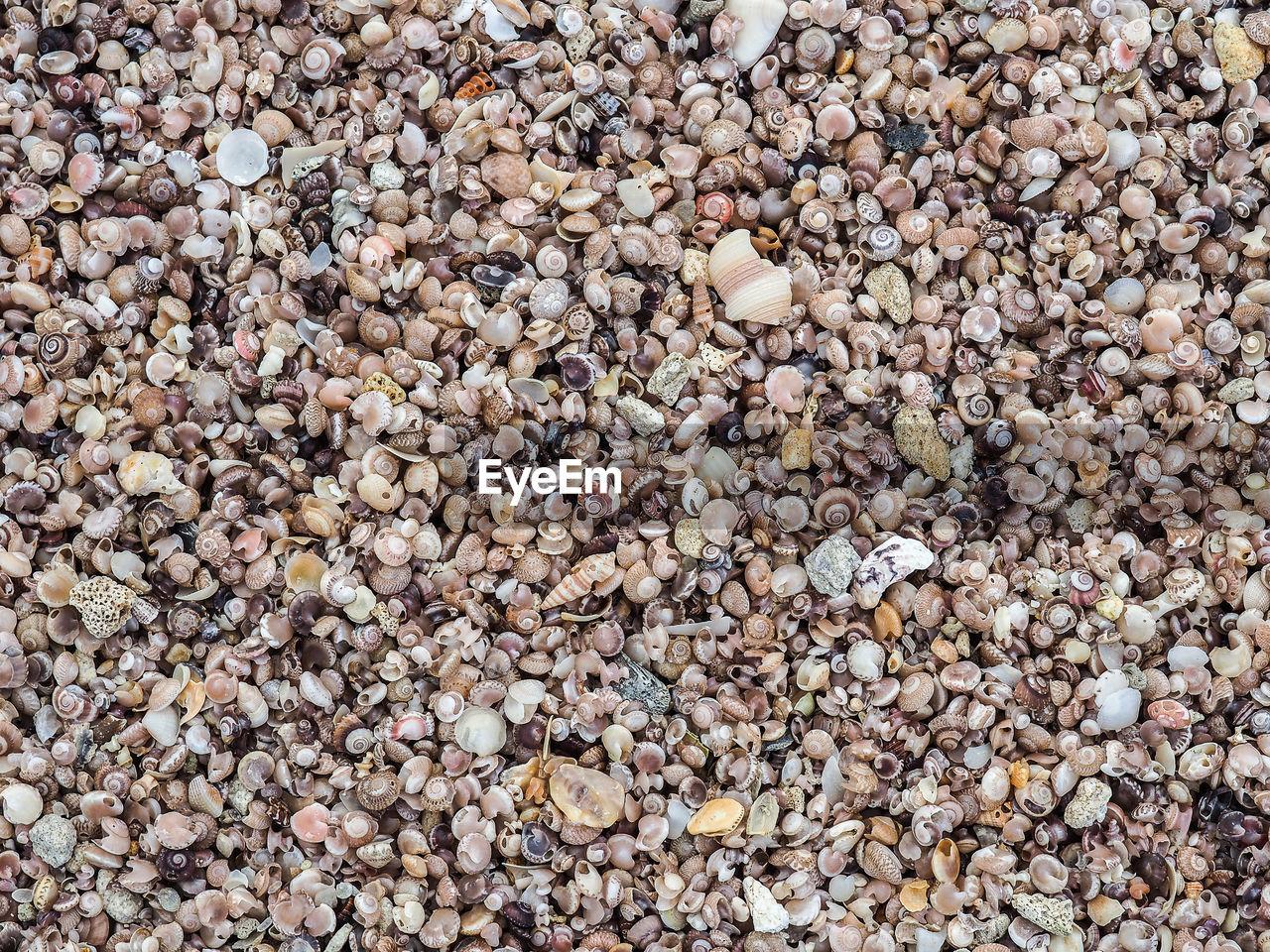 Full Frame Image Of Sea Shells