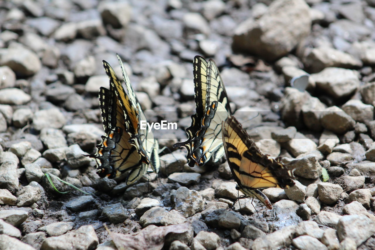 animal themes, animals in the wild, insect, animal wildlife, animal, invertebrate, solid, animal wing, butterfly - insect, rock, day, stone - object, nature, one animal, rock - object, no people, close-up, animal markings, sunlight, outdoors, butterfly, pebble