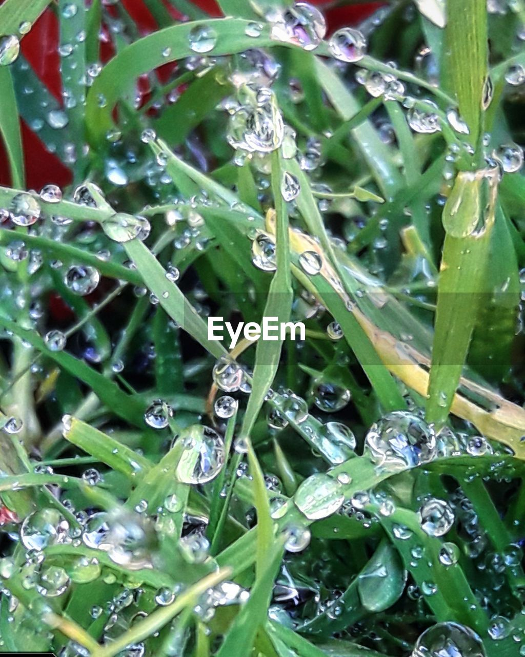 drop, water, wet, green color, plant, close-up, freshness, growth, leaf, plant part, nature, rain, beauty in nature, no people, raindrop, purity, dew, selective focus, rainy season, outdoors, blade of grass, leaves