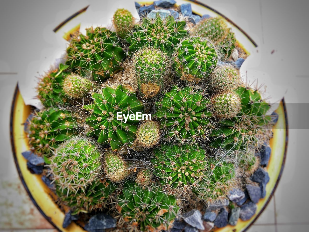 cactus, growth, thorn, plant, green color, nature, high angle view, spiked, potted plant, no people, close-up, day, indoors, beauty in nature, freshness