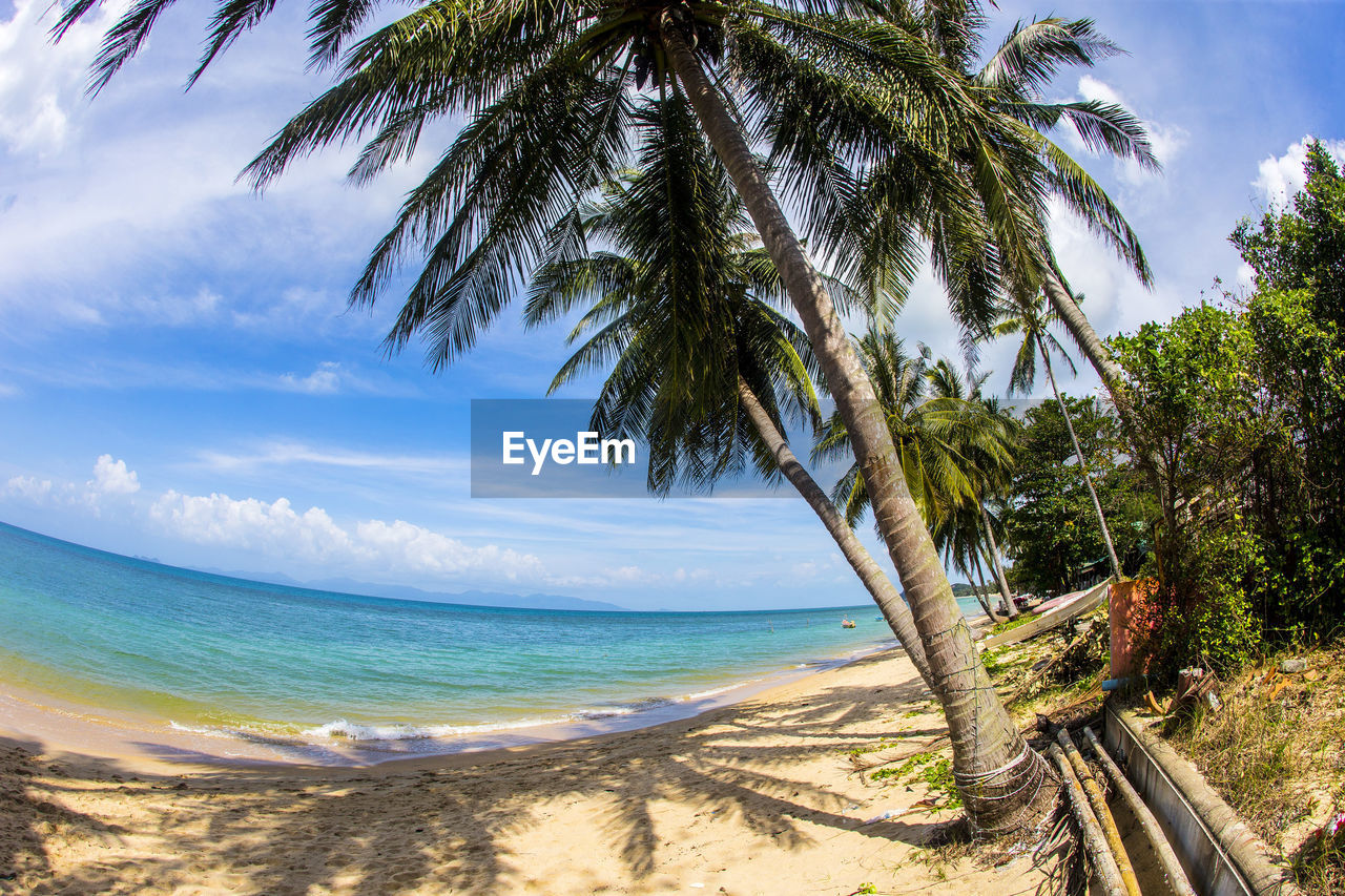 sky, tree, sea, water, palm tree, beach, tropical climate, land, plant, beauty in nature, horizon over water, cloud - sky, scenics - nature, horizon, nature, tranquility, tranquil scene, growth, day, no people, outdoors, coconut palm tree, tropical tree, palm leaf