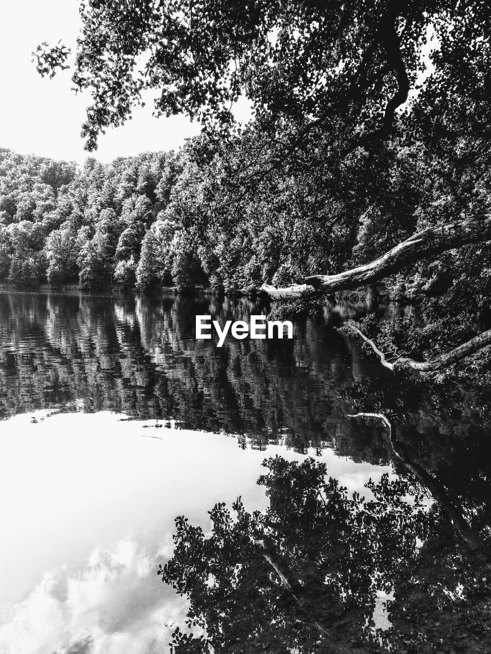 tree, plant, water, nature, tranquility, beauty in nature, lake, reflection, scenics - nature, day, sky, growth, tranquil scene, no people, forest, outdoors, land, non-urban scene