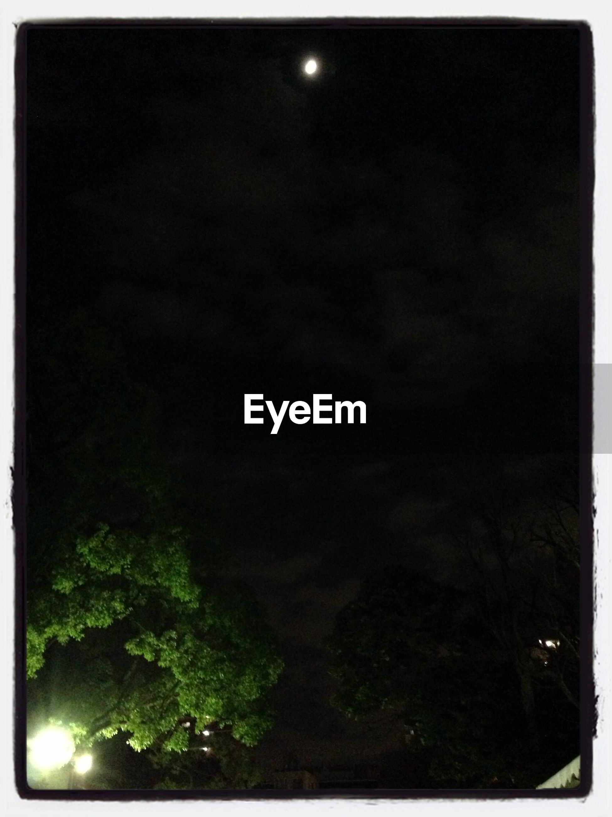 transfer print, night, tree, auto post production filter, low angle view, sky, illuminated, silhouette, beauty in nature, tranquility, dark, nature, scenics, tranquil scene, growth, outdoors, street light, dusk, no people, moon
