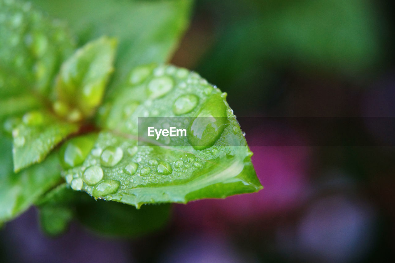 drop, water, green color, close-up, leaf, wet, focus on foreground, freshness, no people, day, nature, raindrop, plant, growth, outdoors, beauty in nature