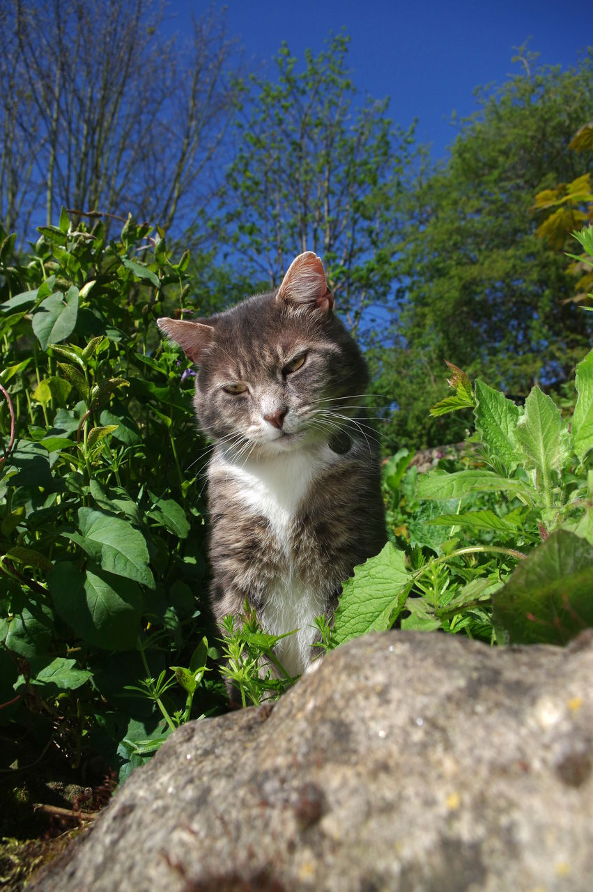 domestic, pets, animal themes, mammal, domestic animals, animal, one animal, cat, domestic cat, feline, vertebrate, plant, nature, leaf, no people, plant part, day, portrait, looking at camera, tree, outdoors, whisker