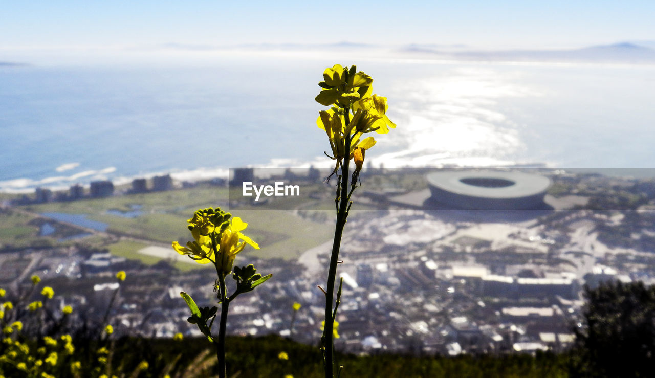 beauty in nature, flowering plant, flower, fragility, nature, vulnerability, plant, water, sea, focus on foreground, freshness, growth, yellow, close-up, day, no people, land, outdoors, sky, flower head