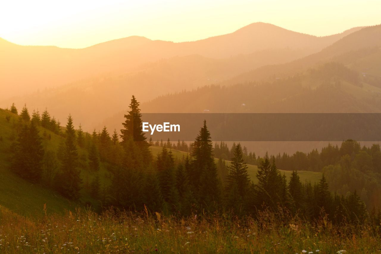 nature, mountain, beauty in nature, tranquility, tranquil scene, tree, scenics, no people, fog, mountain range, landscape, outdoors, growth, day, sky