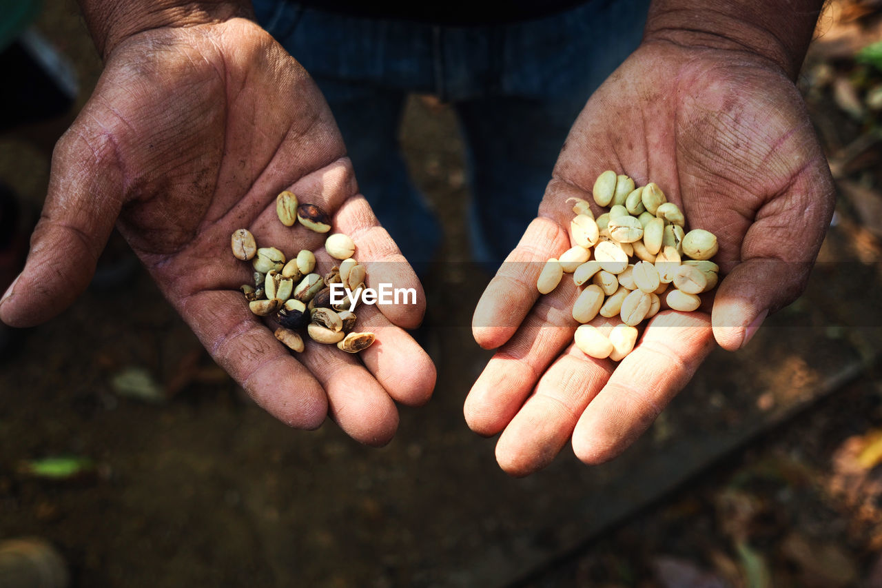 Close-Up Of Person Hand Holding Raw Coffee Beans