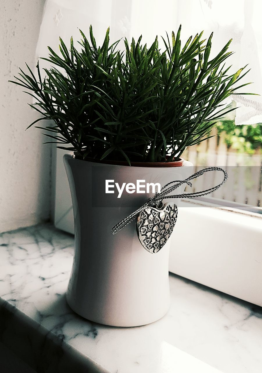 potted plant, indoors, no people, growth, plant, home interior, close-up, day, nature
