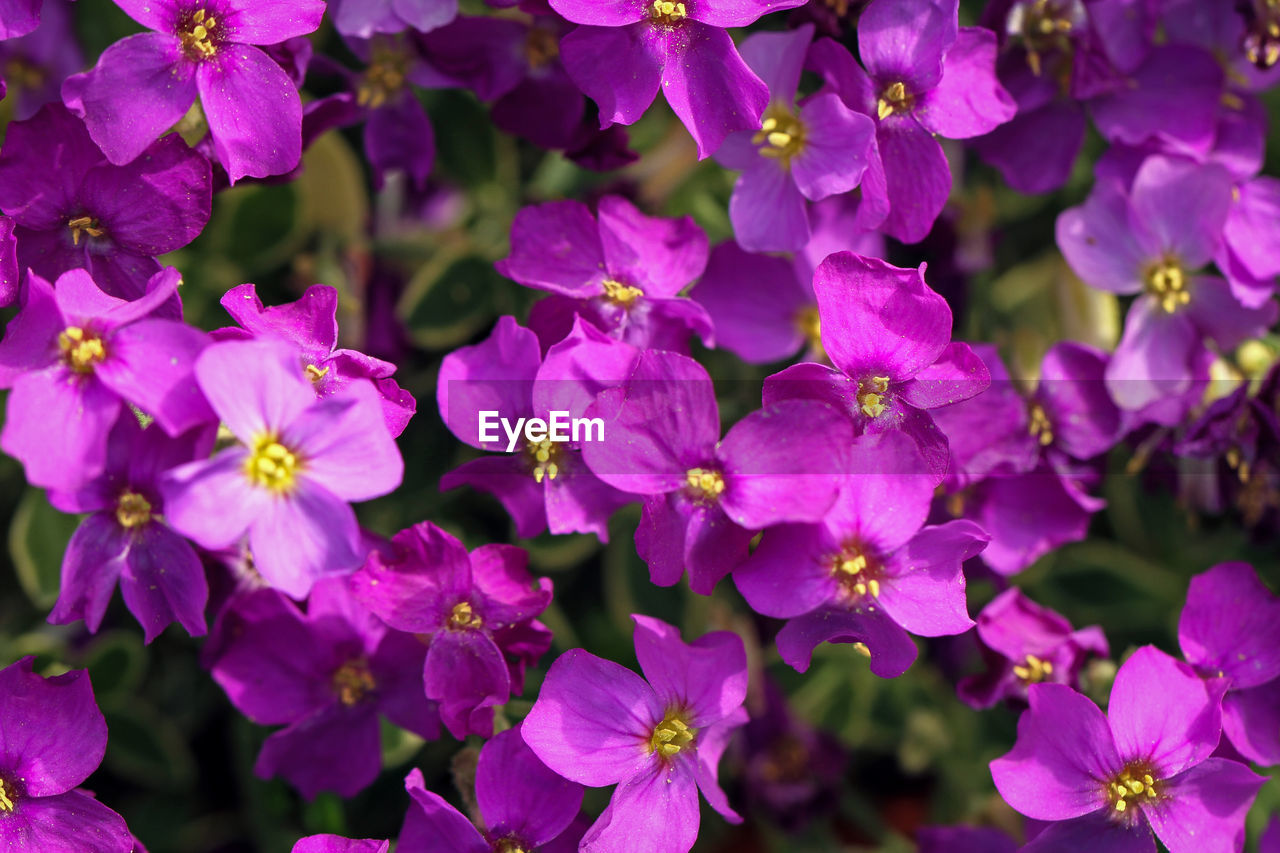 flower, petal, growth, nature, plant, beauty in nature, fragility, purple, outdoors, day, no people, flower head, freshness, blooming, close-up