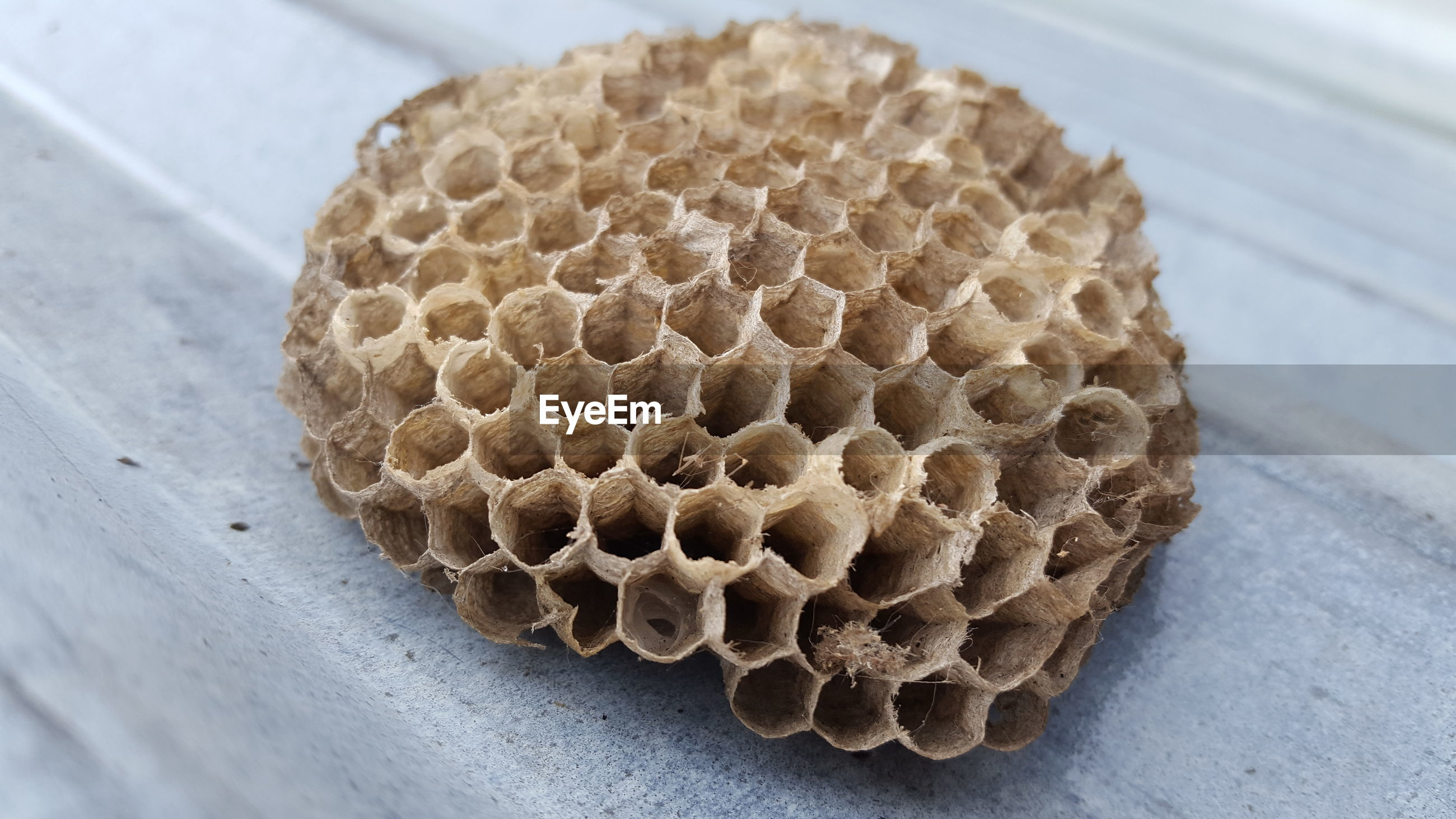 HIGH ANGLE VIEW OF BEE ON A PLATE