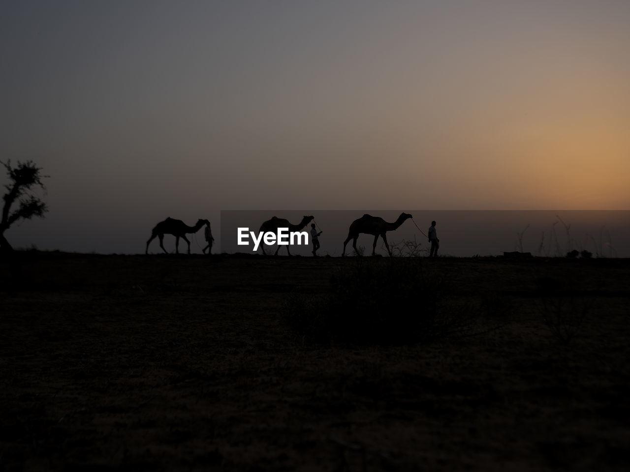 Silhouette Camels On Landscape Against Sky