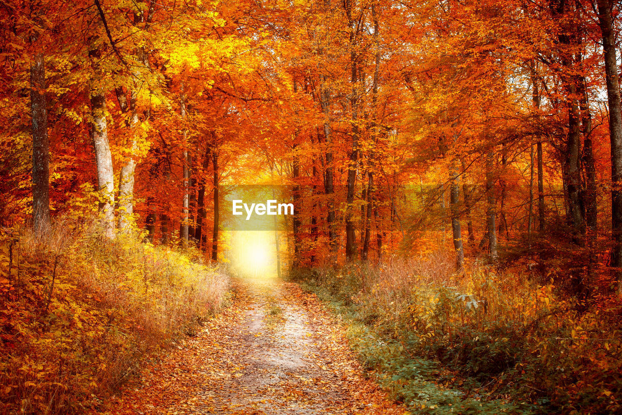 autumn, change, leaf, forest, tree, nature, scenics, orange color, tranquil scene, beauty in nature, single lane road, footpath, the way forward, outdoors, woodland, yellow, tranquility, landscape, day, no people, fog, sunlight, plant, grass