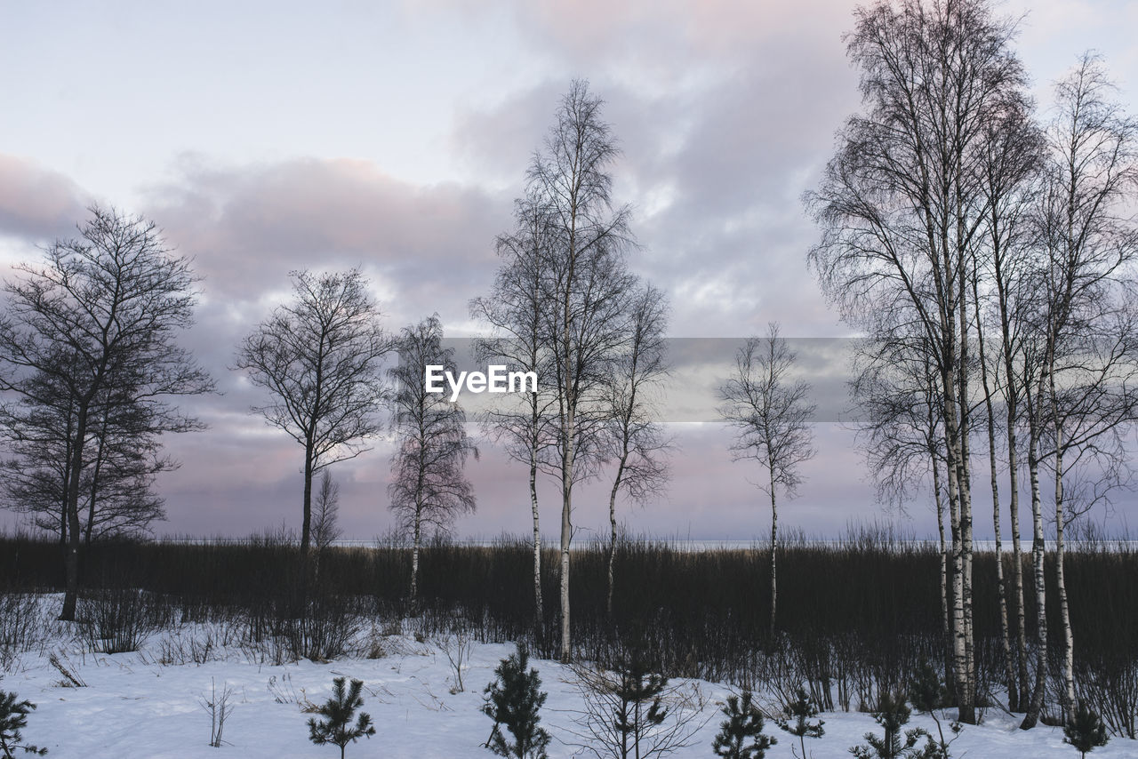 BARE TREES ON SNOW COVERED FIELD AGAINST SKY DURING WINTER