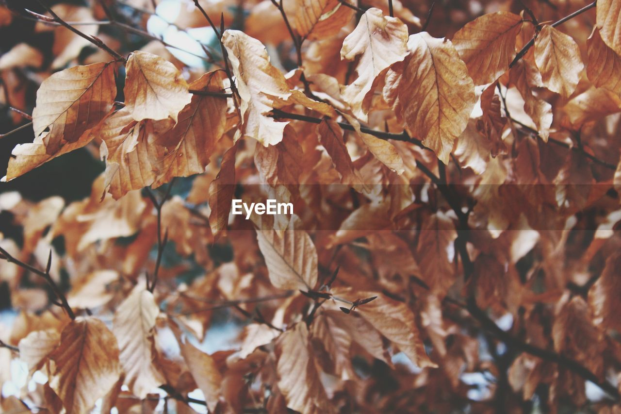 autumn, leaf, nature, dry, change, beauty in nature, plant, day, outdoors, fragility, no people, close-up, growth