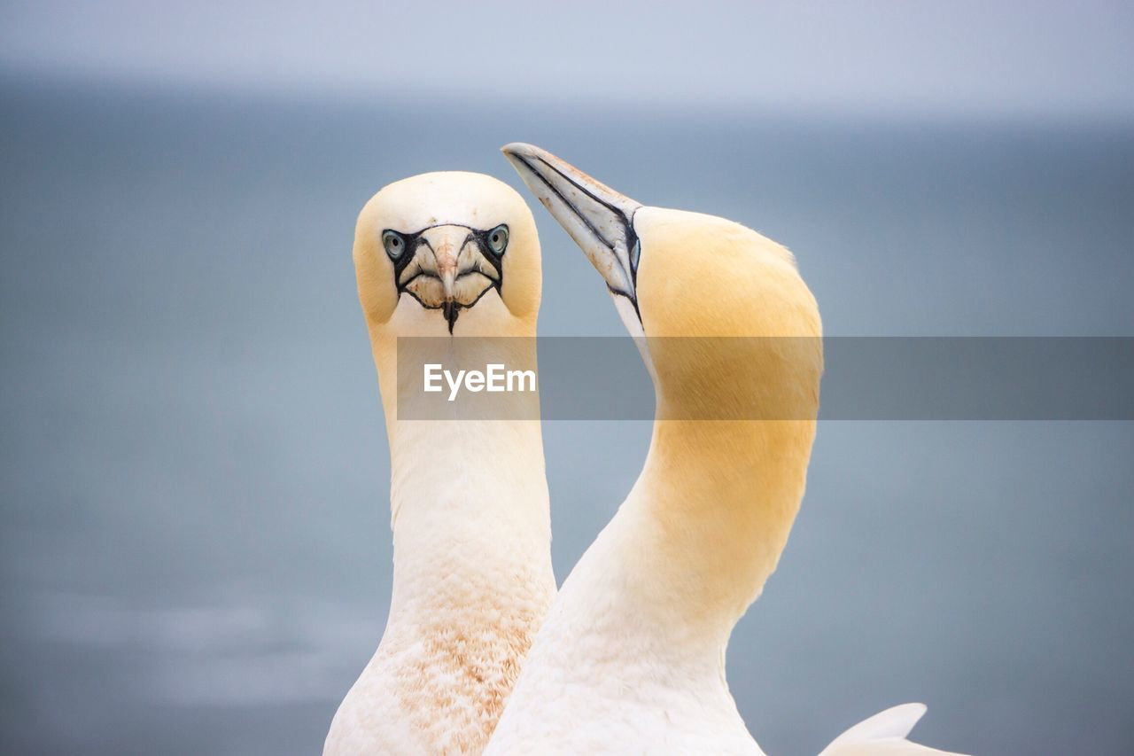 CLOSE-UP OF SWAN ON WHITE WALL
