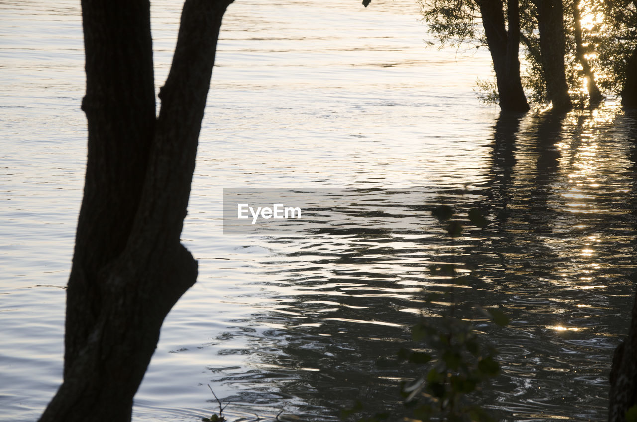 water, trunk, tree trunk, tree, nature, plant, no people, lake, tranquility, outdoors, beauty in nature, land, day, growth, scenics - nature, tranquil scene, focus on foreground, environment