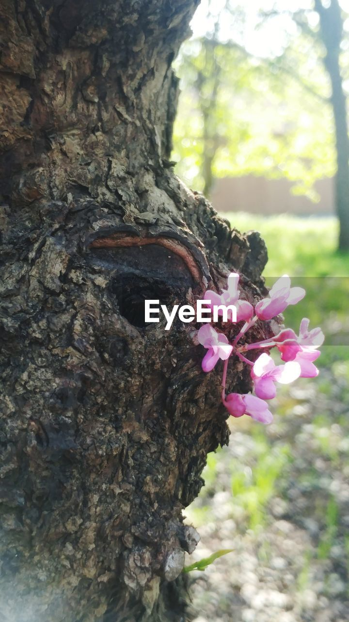 tree trunk, tree, growth, nature, flower, day, bark, petal, beauty in nature, textured, focus on foreground, fragility, close-up, no people, outdoors, freshness