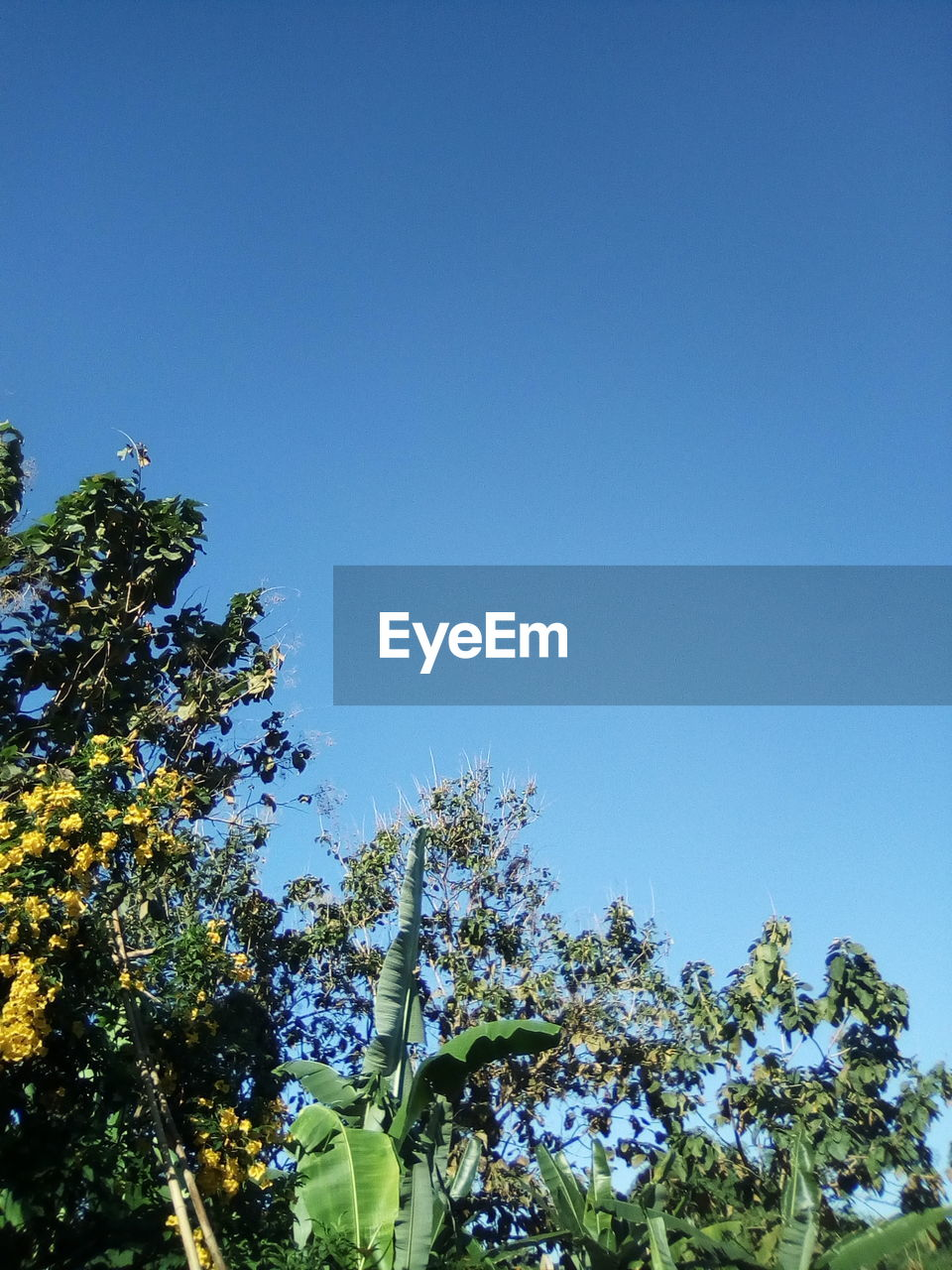 sky, plant, tree, clear sky, growth, low angle view, copy space, blue, nature, beauty in nature, day, no people, tranquility, sunlight, outdoors, flower, scenics - nature, flowering plant, branch, tranquil scene