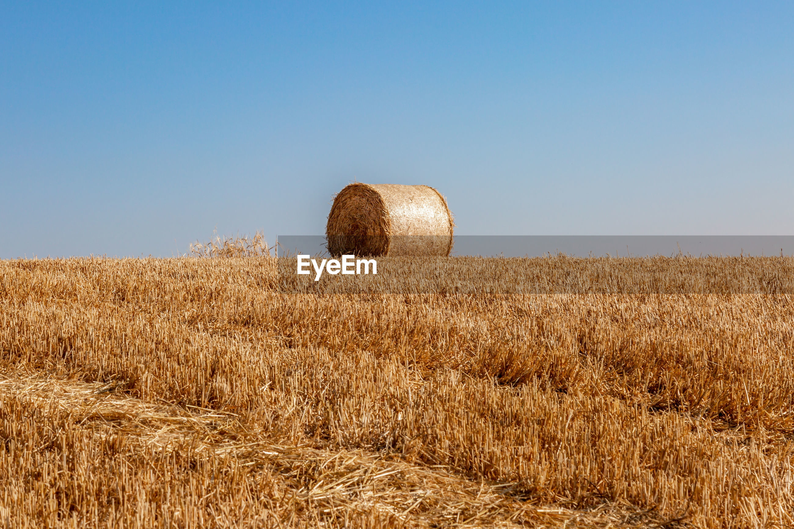 HAY BALE ON FIELD AGAINST CLEAR SKY